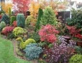 Растения для осеннего сада