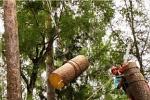 Удалять деревья с участка