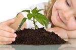Живые растения для детской комнаты