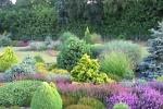 растения для маленького сада