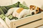 мягкие лежаки для собак