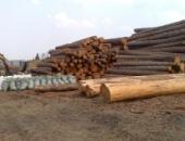 Дерево на Woodresours.ru