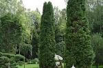 качественное озеленение участка