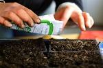 Правила выбора семян